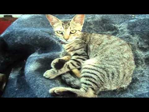 The Little Cat. A pequena Gatinha na praia de Itaipu.