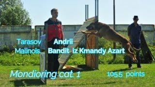 "MR1 ""Mafia"". Tarasov Andrii Mondioring cat. 1 Malinois Bandit iz Komandy Azart 105,5 points"