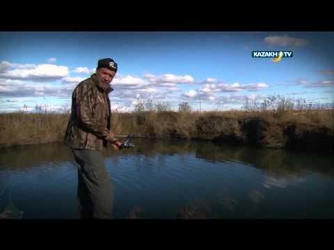"""Spirit of the wild"" #49 (13.02.2016)-Kazakh TV-eng"
