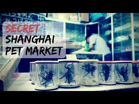 Visit the secret Shanghai Pet Market!