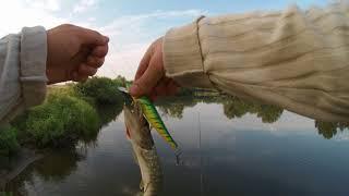 Рыбалка на карася с ночевкой! Жарим сальцо на костре и просто кайфуем