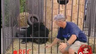 Stupid Man Gets Attacked by Gorilla