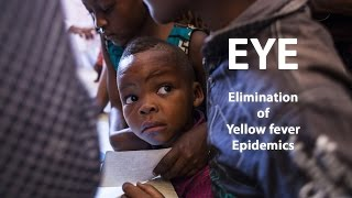 who eye strategy working together for eliminating yellow fever epidemics