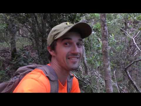 Hawaiian Forest Rifle Hunt For All Things Furry- Goats, Pigs, And Black-tailed Deer