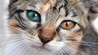 Homeless cat with different eyes  Heterochromia Бездомный кот с разными глазами  Гетерохромия