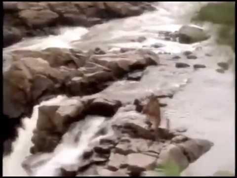 Roch Voisine : La Légende Oochigeas ( clip officiel )