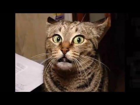 Видео про котэ котов, приколы, смешные коты видео ролики
