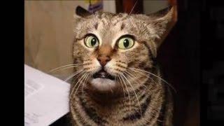 Подборка смешных котов. Часть 1