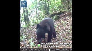 Rare creatures caught on camera in SE China