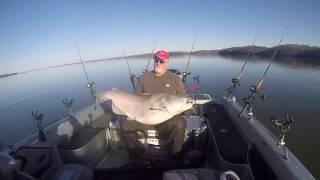 Wheeler Lake 81 lb Catfish