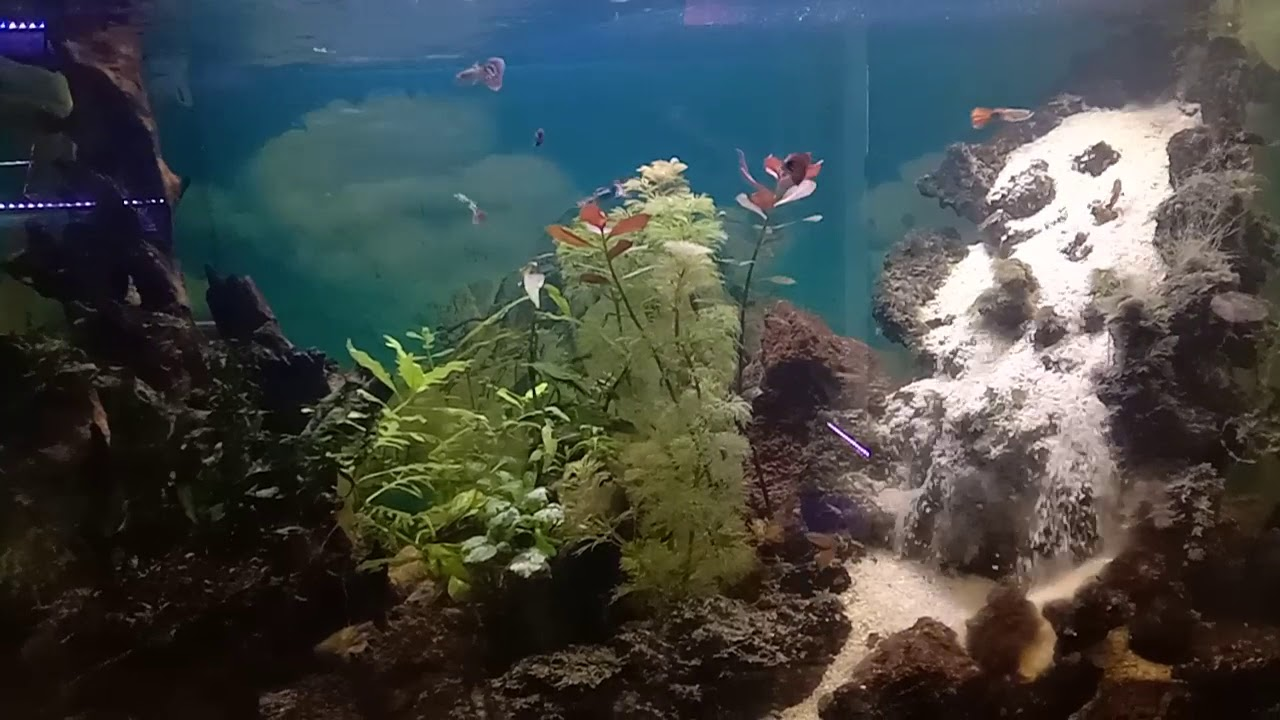 Aquascape model air terjun - YouTube