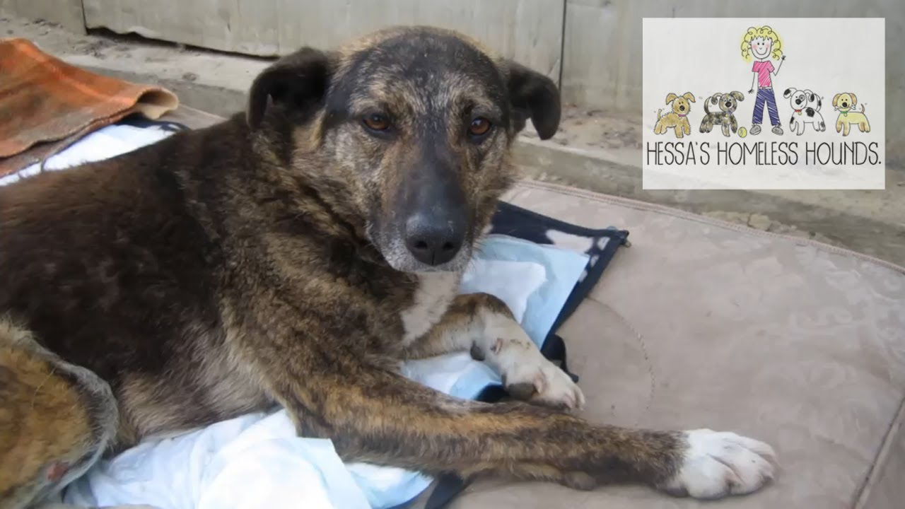 Paralysed Dog Rescued