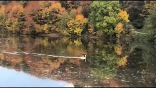 Уроки Мастера | Озеро | Вадим Шишкин