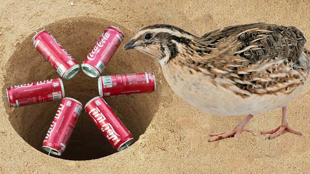 Amazing Hole For Bird Trap   Parrot Vs Coconut - Quail Vs Cocacola Can   Easy Bird Trap Technology