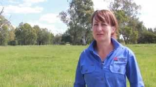 Lead poisoning in cattle - Local Land Service update