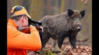 Wild Boar Hunting Chasse Au Sanglier Wildsau Jagd 2017 NEW