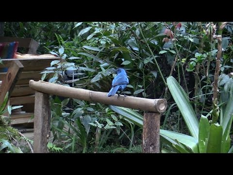 Birds & other observations in Guatemala
