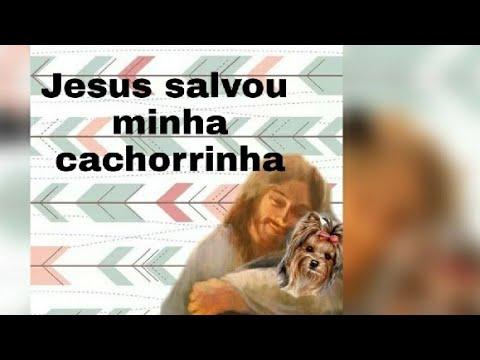 Testemunho Jesus cura animal !
