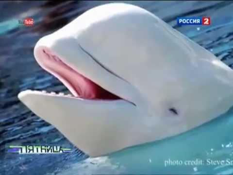 Вопрос: Правда ли что киты поют?