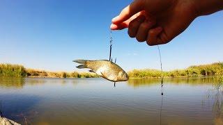 Насаживание живца на крючок для ловли щуки.Рыбалка.Fishing.