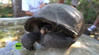 Encuentran una tortuga gigante extinta en las islas Galápagos
