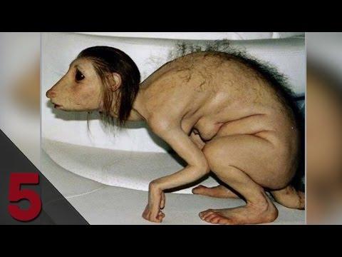 Le 5 Mutazioni PIU' SCIOCCANTI negli animali!!