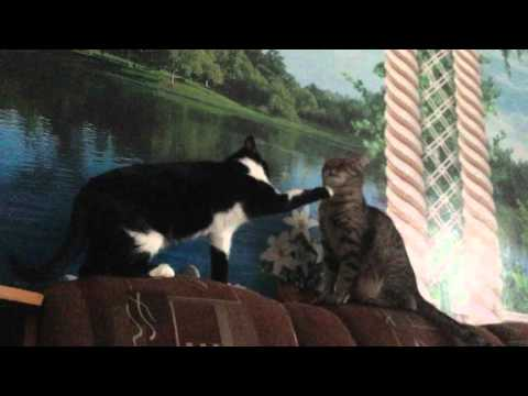 Дружеское приветствие, кошки