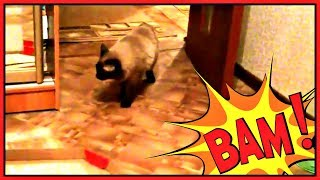 Видео про кота. Испугались коробки от пиццы!(Сегодня у меня на канале видео про кота. Мой любимый #кот Морис испугался коробки от пиццы! ))) На этом канале..., 2015-01-12T11:32:54.000Z)