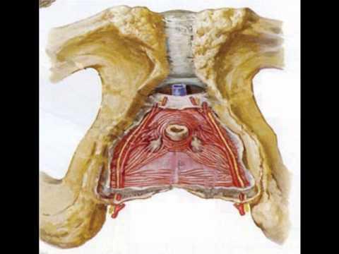 Pudendal Nerve Block procedure - Harley Pelvic Care Center.