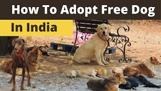 How to adopt dog in India I Adopt a dog for free in India l Free dogs for adoption