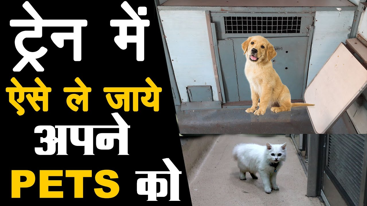 How to carry your pet in train: Rules and Charges