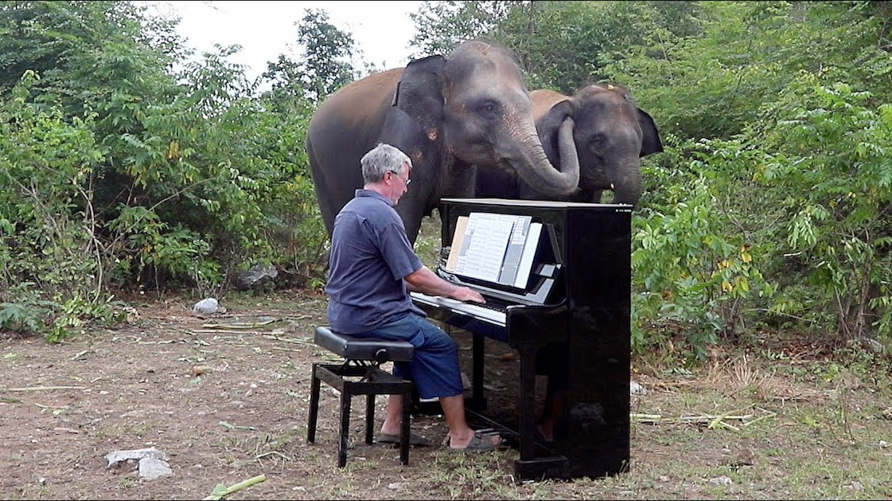 "Elephants ""Singing"" with Piano in Their Own Way - YouTube"