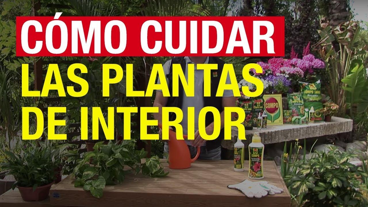 Cómo cuidar las plantas de interior - COMPO Jardinería - YouTube