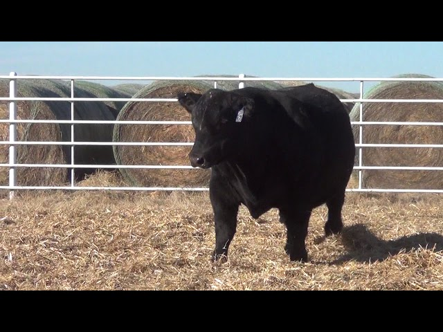 Express Ranches Lot 362