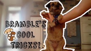 Bramble The Border Terrier's Cool Tricks!
