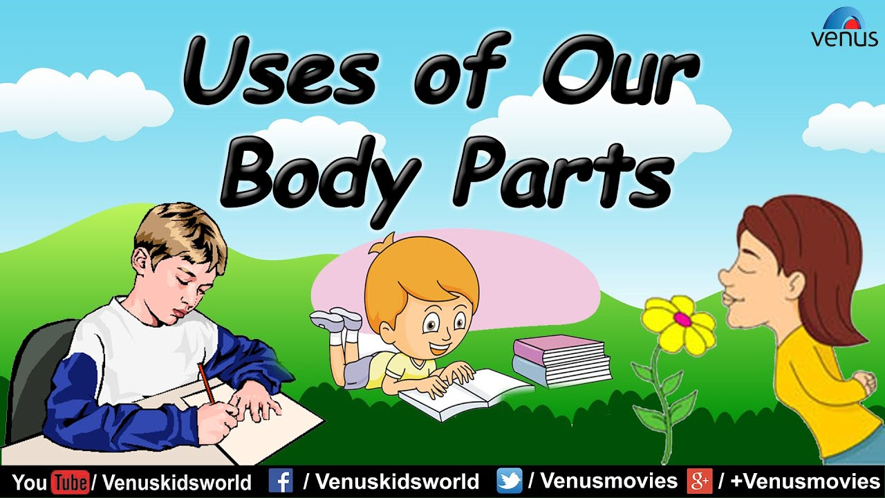 Uses Of Our Body Parts Youtube
