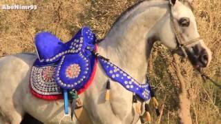 خيل وخيالة - حسام الدين -  Arab horses _ Hosam Eldein thumbnail