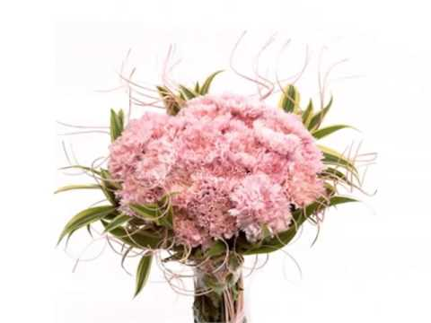 Carnation Hand Bouquet | Colorful Canation Beautiful Pictures