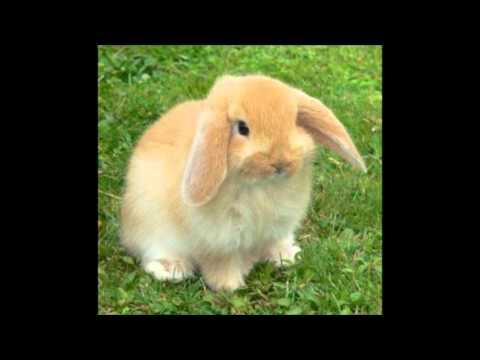 Lapin mignon youtube - Photo de lapin mignon ...