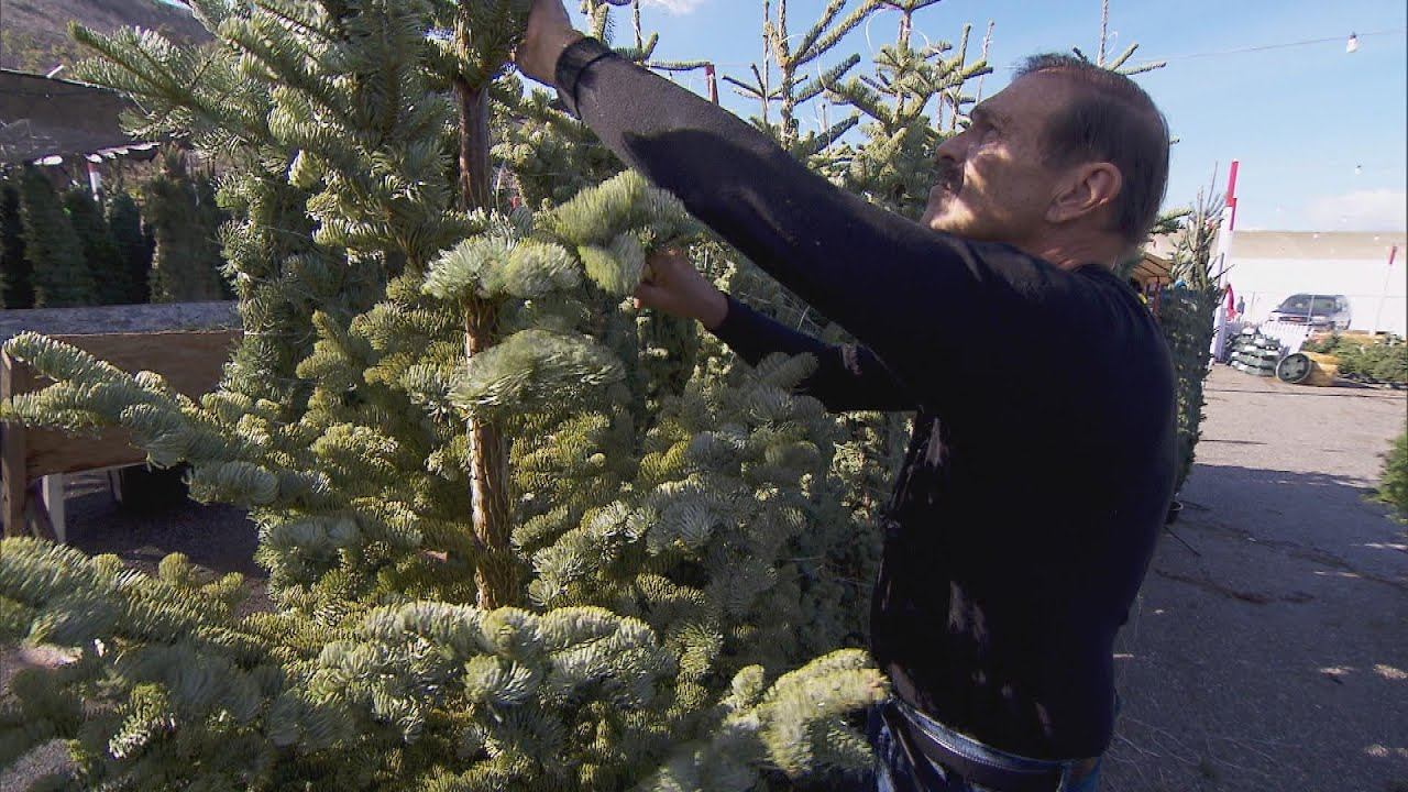 Why Christmas Tree Farms Are Blaming Shortage On 2008