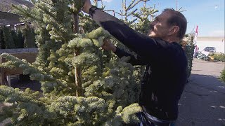 Why Christmas Tree Farms Are Blaming Shortage on 2008 Recession