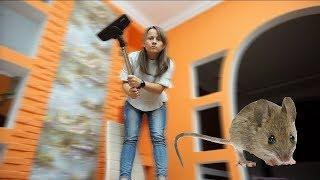 Bogdan aduce soareci si pisica in casa, dar mamei ii este frica   Ce a adus de fapt? Bogdan's Show