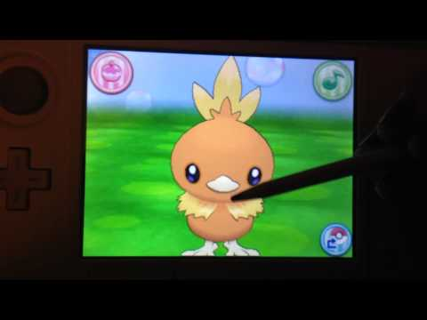 Pokemon Amie - Torchic