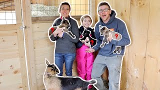 FINDING Out the GENDER of Our Miniature GOAT'S TRIPLETS!