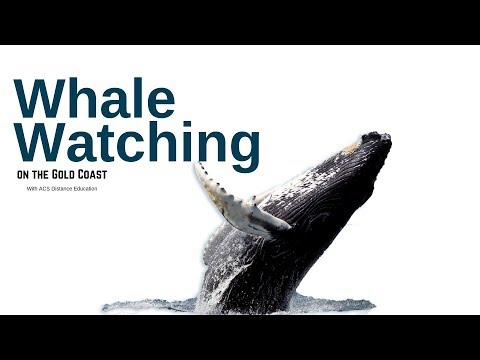 Whale Watching on the Gold Coast- ACS Distance Education
