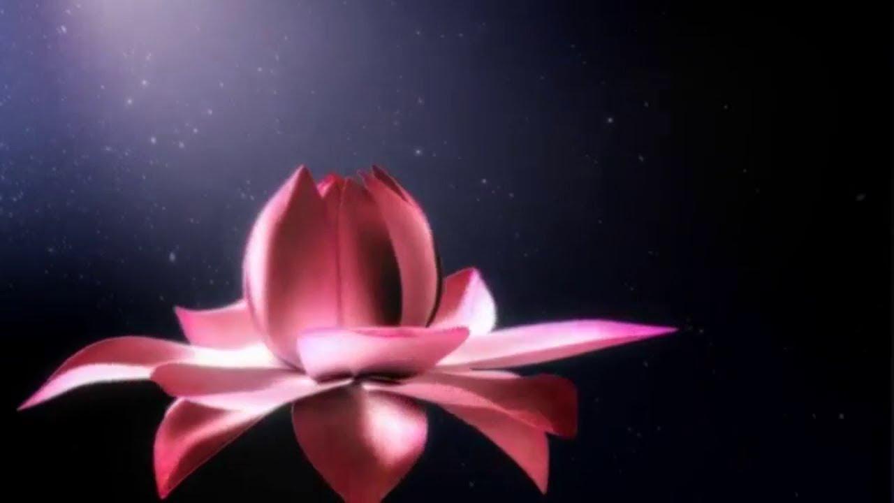 Lotus Flower Heartwarming Inspiration Piano Instrumental Music