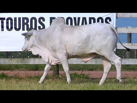 LOTE 75   FHGN A 2730