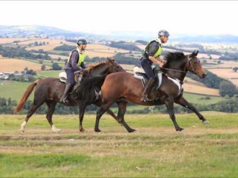 The Morgan Horse InThe UK