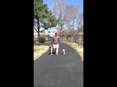 Dog Aggression Training With Behavior Adjustment Training and Constructional Aggression Treatment