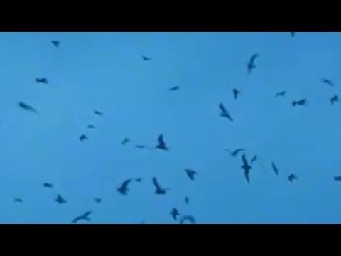 A Flock Of Seagulls   i ran so far away Vídeo Clip